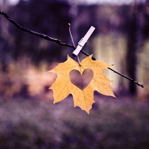 Heart Leaf Fall Wedding Idea