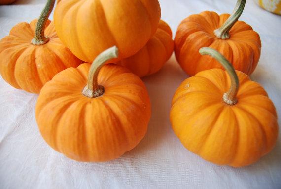Real Mini Pumpkin Decoration Fall Pumpkin Themed Wedding Idea