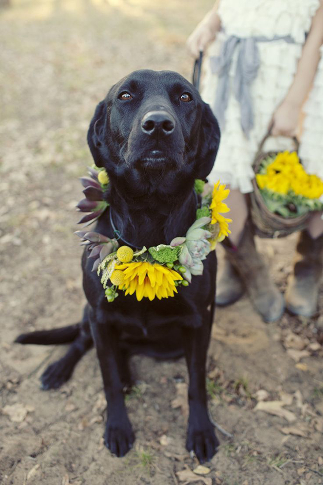 Sunflower Dog Wedding Ideas